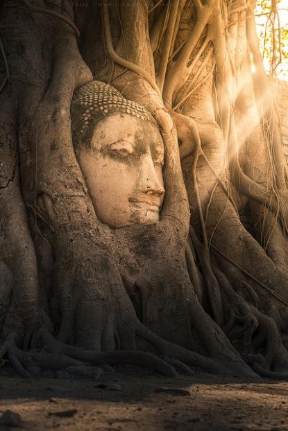 evan-sawyer-buddha