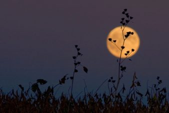 cropped-harvest-moon.jpg