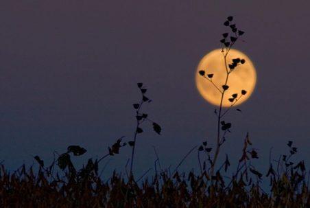 cropped-harvest-moon.jpg