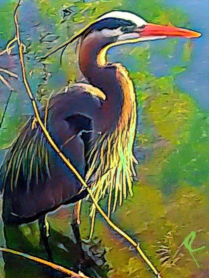 Green Lake Heron by Rob Kashey