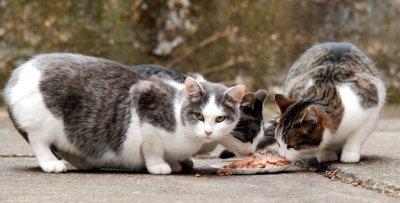 feral-cats-38c687f6a8cb45b1