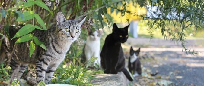 feral-cats-sitting_28229
