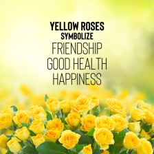 yellow-rose-meaning
